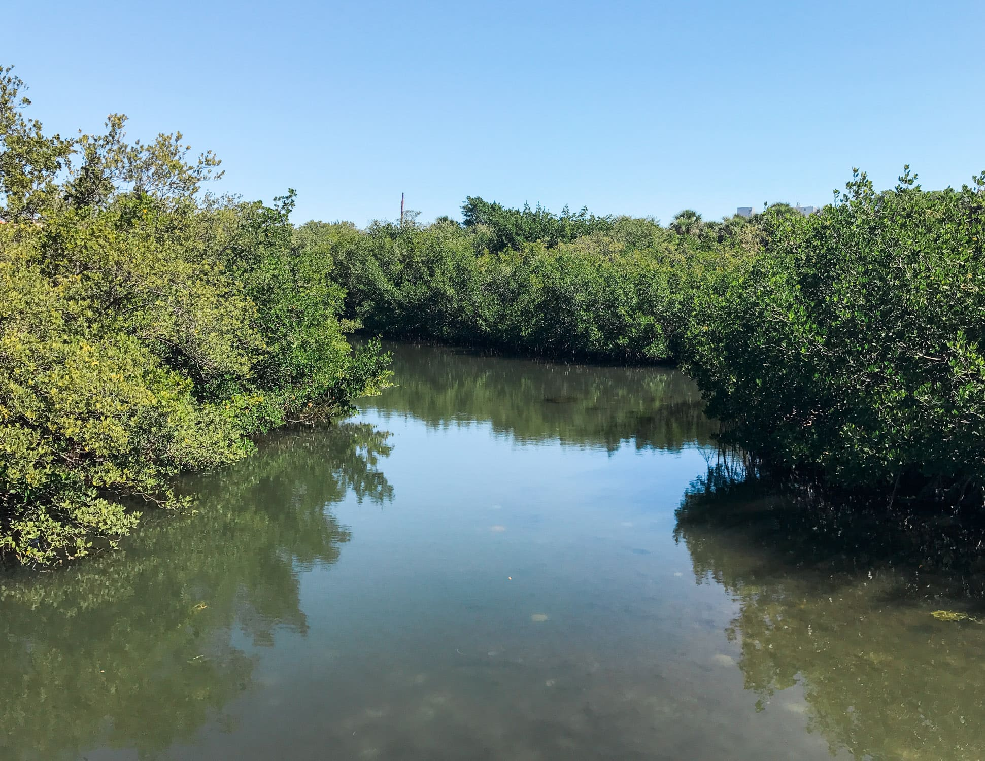Kayaking in the Longboat Key mangroves | How to plan an adventurous weekend getaway in Longboat Key, Florida including a day of boating! #LoveFL sponsored by @visitflorida | Florida travel tips, beach vacation, vacation ideas, vacation goals, travel blogger Ashley Brooke Nicholas, Florida travel guide, Longboat Key travel guide, Sarasota travel guide, beautiful beaches, boating, affordable travel, US travel, summer vacation, spring break ideas
