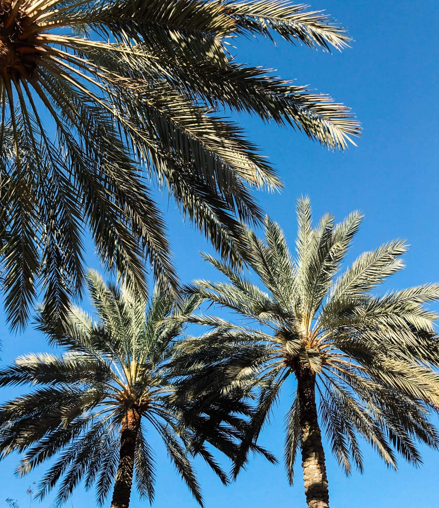 Nothing beats Florida palm trees! Planning a trip to Orlando? I've rounded up the top 10 things to do in Orlando, Florida, that are guaranteed to make your trip a success. Whether you're moving to Orlando or just headed in on vacation, you will LOVE this list of fun activities in Orlando by Florida travel blogger Ashley Brooke Nicholas #CORTatHome sponsored by CORT Furniture | affordable travel tips, orlando vacation tips, vacation tips, orlando eye, leu gardens, universal studios, disney
